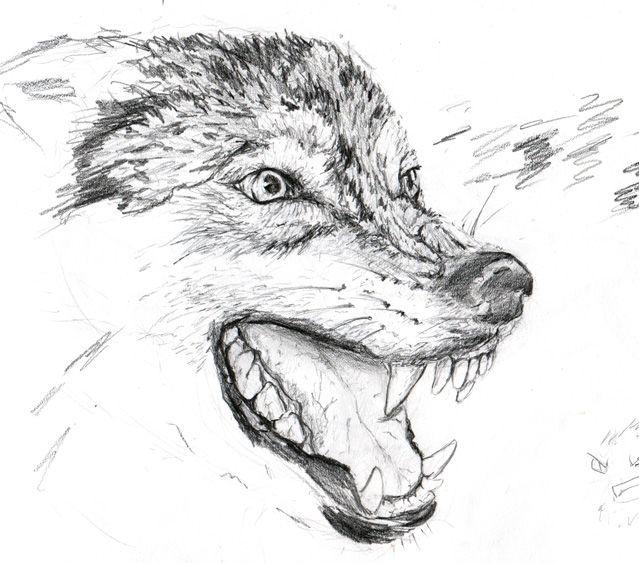 Картинка карандашом оскал волка