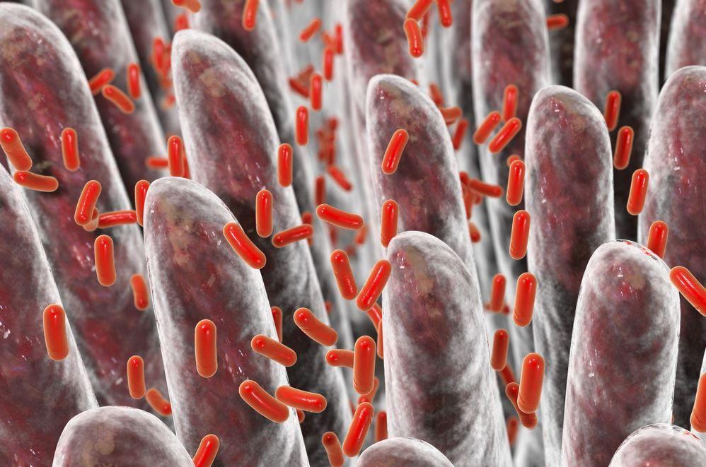 batteri e malattie