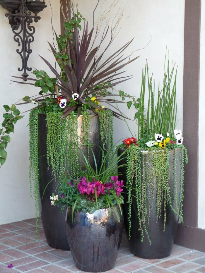 Modern Potted Plants Outdoor