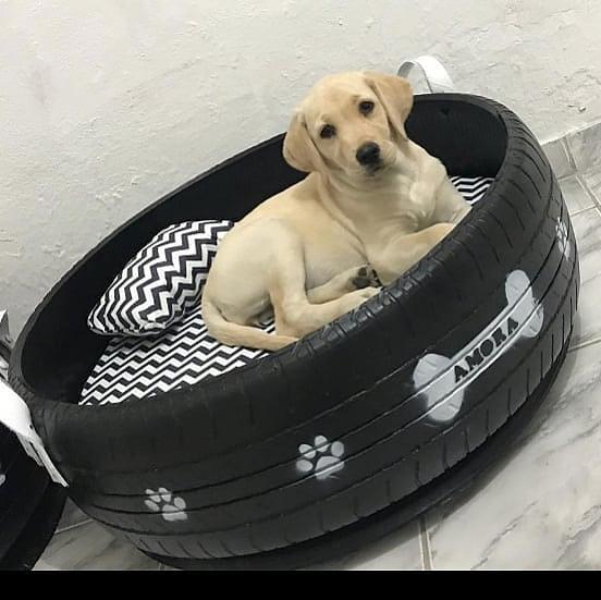 24-Jähriger verwandelt alte Autoreifen in bunte Betten für Haustiere