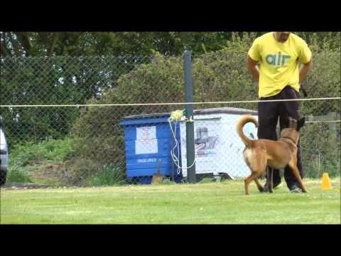 Fenzi Dog Sports Academy Ob530 Fci Style Heeling Sporting