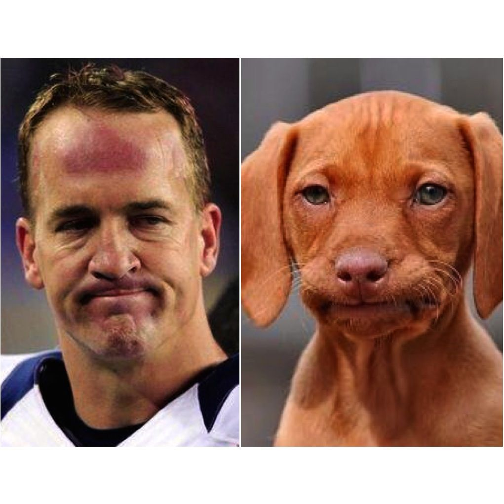 Here Are 15 Dogs Who Look Like Two-Time Super Bowl Champion Peyton Manning