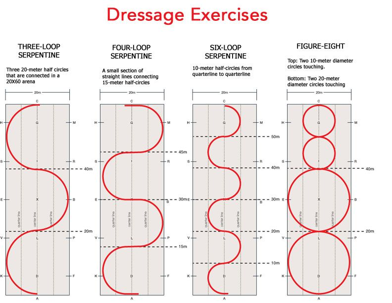 Download this chart of dressage arena exercises to help