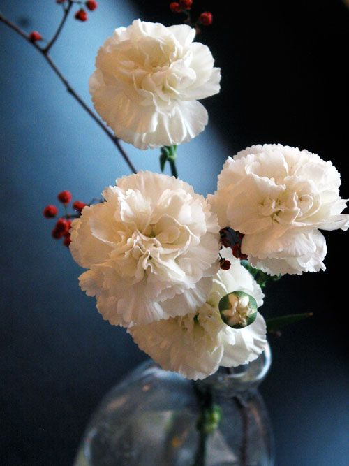 Beautiful Frugal Flowers 3 Ways To Use White Carnations For Holiday Arrangements Carnation Flower Meaning Carnation Flower White Carnation