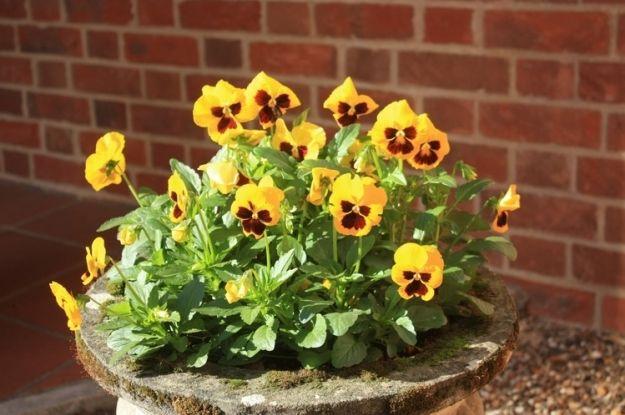 Plantas flores y jardin on pinterest bonsai balconies for Decoracion de casas con plantas naturales