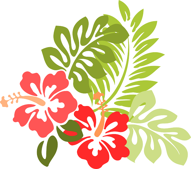 Image gratuite sur pixabay hibiscus fleur feuilles - Fleur d hibiscus dessin ...