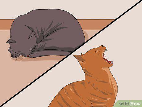 Das Alter Deiner Katze Bestimmen Katzen Und Alter