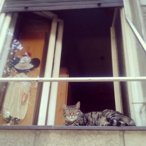 belgrade #window#cat#tabby