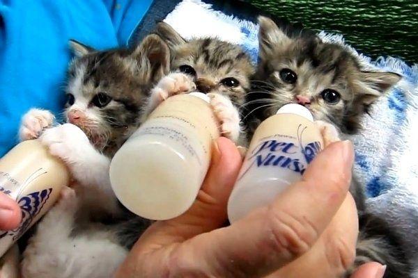 Bottle Feeding Orphan Kittens Cute Baby Cats Kittens Cutest Baby Cats