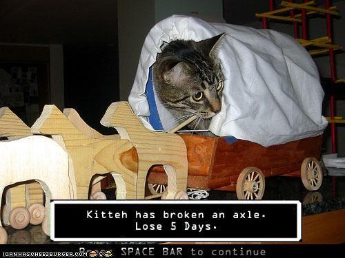 Kitten has broken an axle..