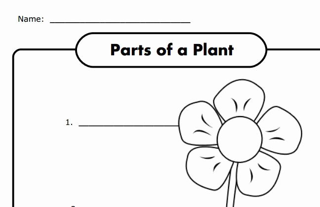 Plants Worksheet BookletHere is a fun little booklet you