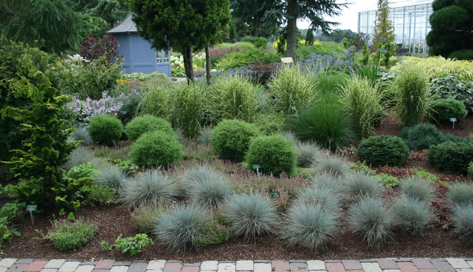 festuca cinerea blauschwingel diy garden pinterest g rten. Black Bedroom Furniture Sets. Home Design Ideas