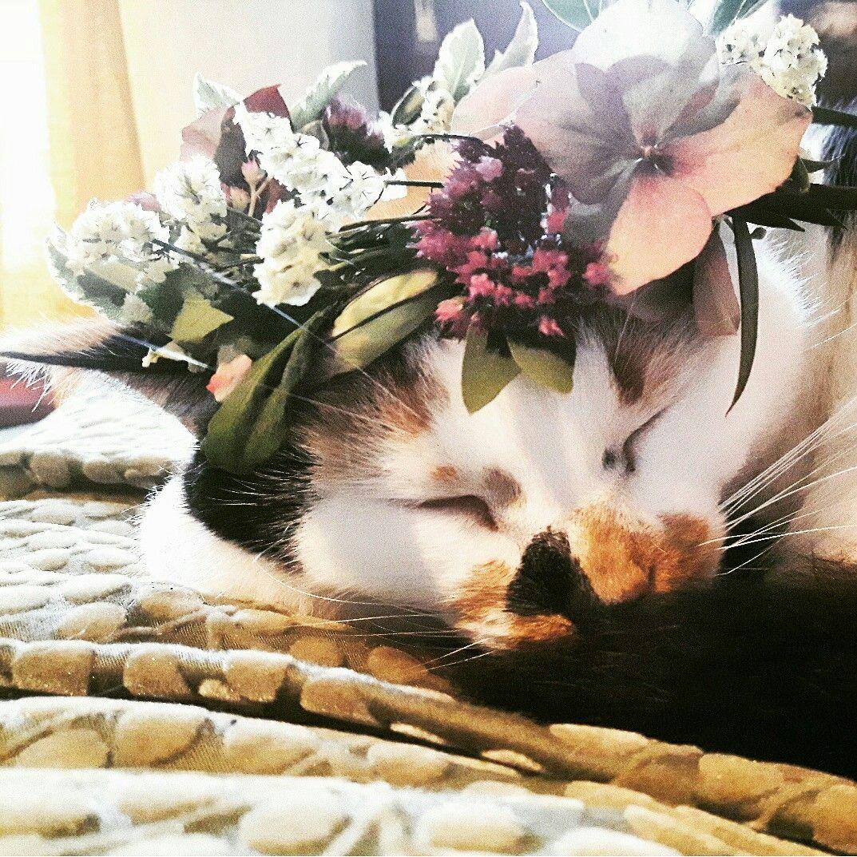 Hendricks With Her Petal Studio Flower Crown Petalstudio Flowers