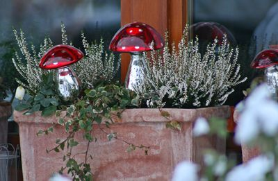 Blumenkasten Weihnachtlich Dekorieren winterliche fensterbank hof garten fensterbänke