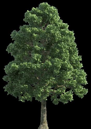 Green Realistic Tree Png Clip Art Green Realistic Tree Png Clip Art Art Clip Green Png Realistic Tree Tree Photoshop Tree Textures Tree Plan
