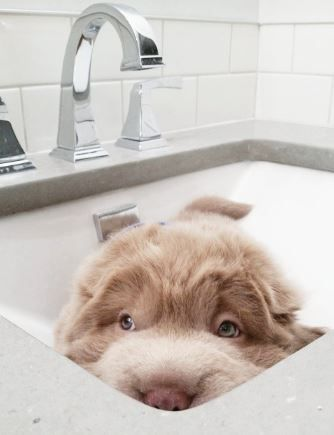 Pup in the sink
