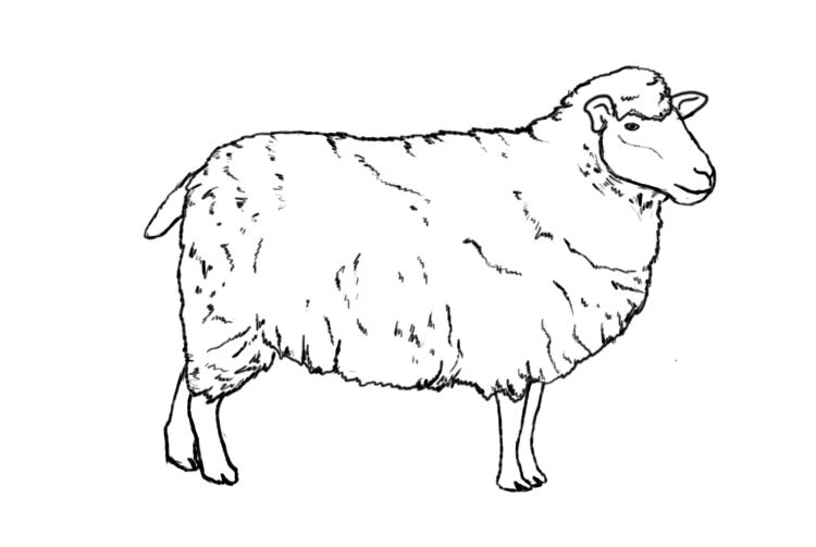 How To Draw A Sheep Art 101 Sheep Drawing Drawings Animal Drawings