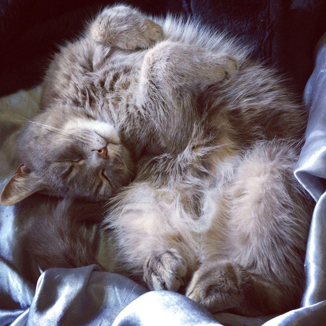 Борису картинки, картинки спокойной ночи с котятами вислоухими