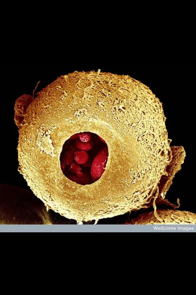 A day in the life of an ovum?
