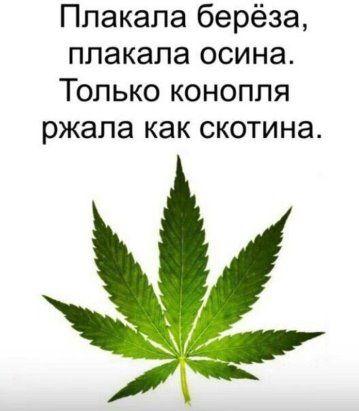 Старухи и марихуана марихуана и головные боли