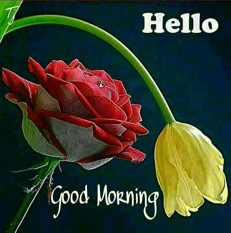 new style of good morning wishes cards images pics festival