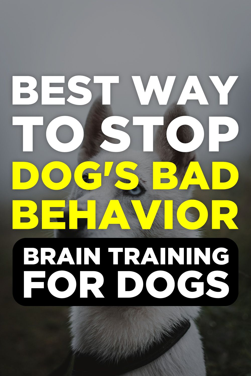 Brain Training For Dogs Review Dog training videos, Dog
