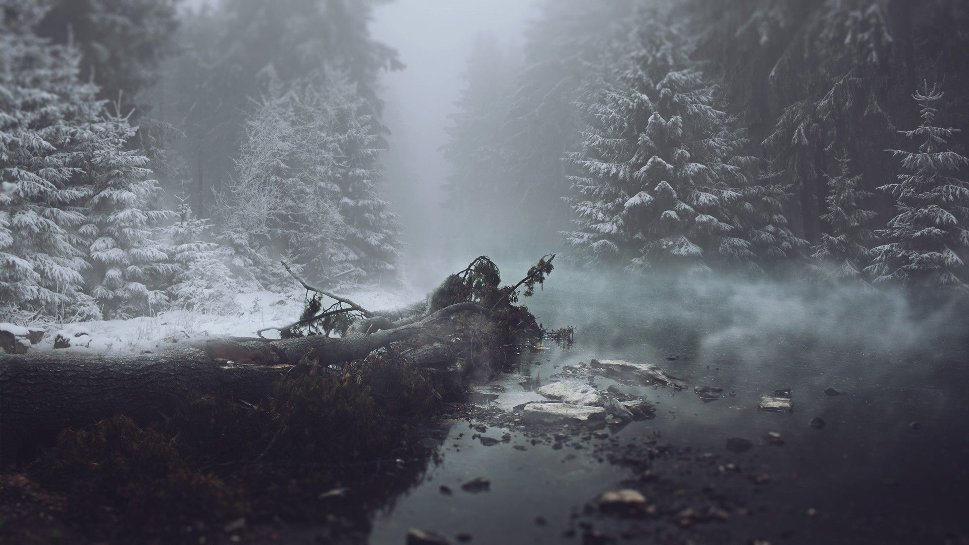 General 1920x1080 Winter Mist Trees Wallpapers Pinterest