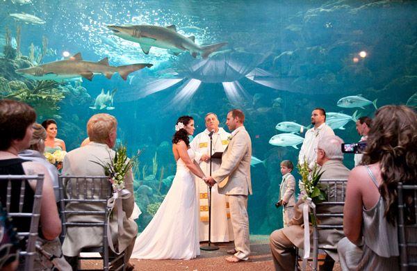 Florida Beach Wedding With Aquarium Reception: Florida Wedding Venue: The Florida Aquarium In Tampa! Get