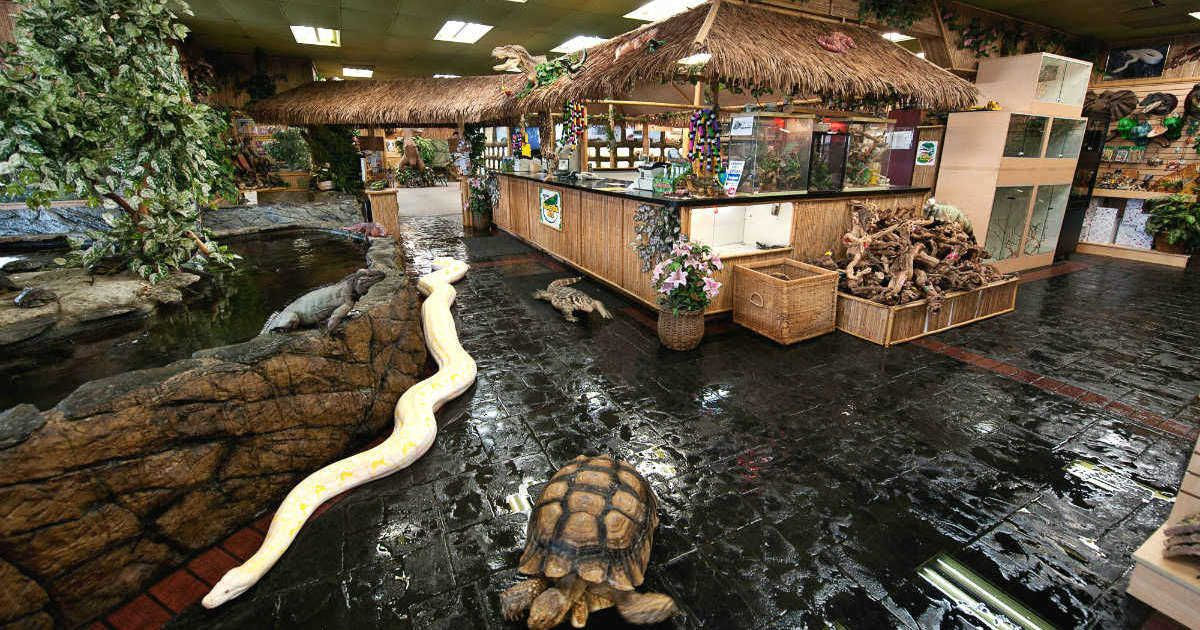 Ontario Is Opening The Largest Reptile Zoo In Canada And Its Full Of Creepy Crawlies With Images Reptile Zoo Reptile Room Fountain Valley