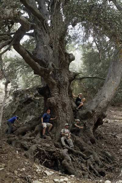 LA Times: Wildlands Conservancy naturalists believe they have discovered the largest oak in North America. The oak's trunk is 12.2 feet in circumference and is located in a meadow surrounded by steep slopes in the Oak Glen area of the San Bernardino Mountains.  It is impossible to guess how many centuries the tree has stood on the steep, rocky hillside overlooking a narrow stream-fed canyon thick with incense cedars, canyon maples and bracken fern.
