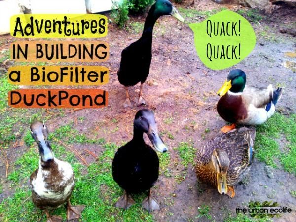 how to build a duck pond with filter