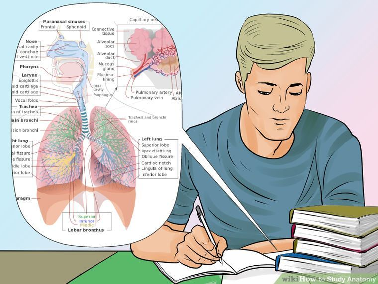 3 Ways to Study Anatomy - wikiHow | Anything Medical | Pinterest ...