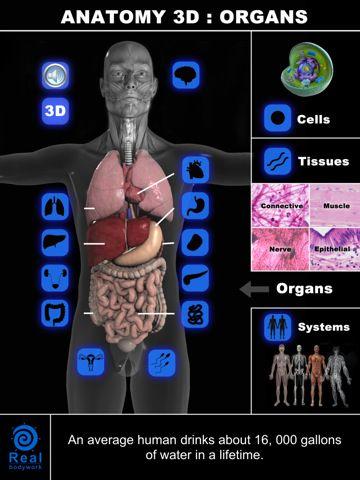 Anatomía en 3D: Órganos, para aprender la anatomía del cuerpo humano ...