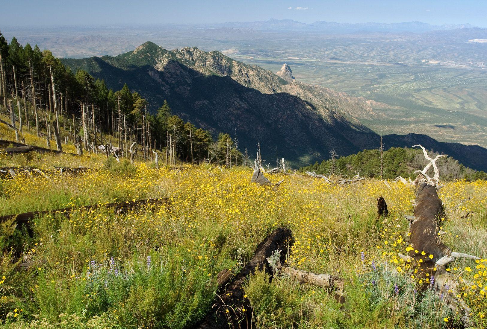 Crest Trail View Across Madera Canyon, Santa Rita Mtns, AZ