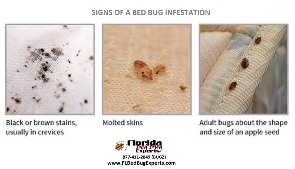 Pin by FL Bed Bug Experts on Signs of Bed Bugs (With