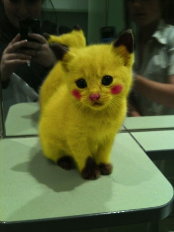 The 57 Greatest Pet Costumes Ever Pikachu Cat Cute Funny Animals Cute Animals