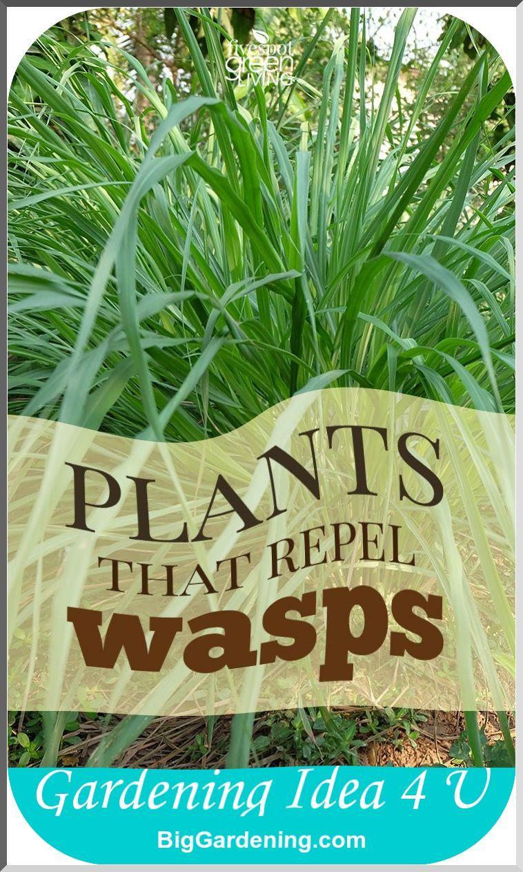 Pin by Kim Geiszler Job on gardening Plants, Wasp