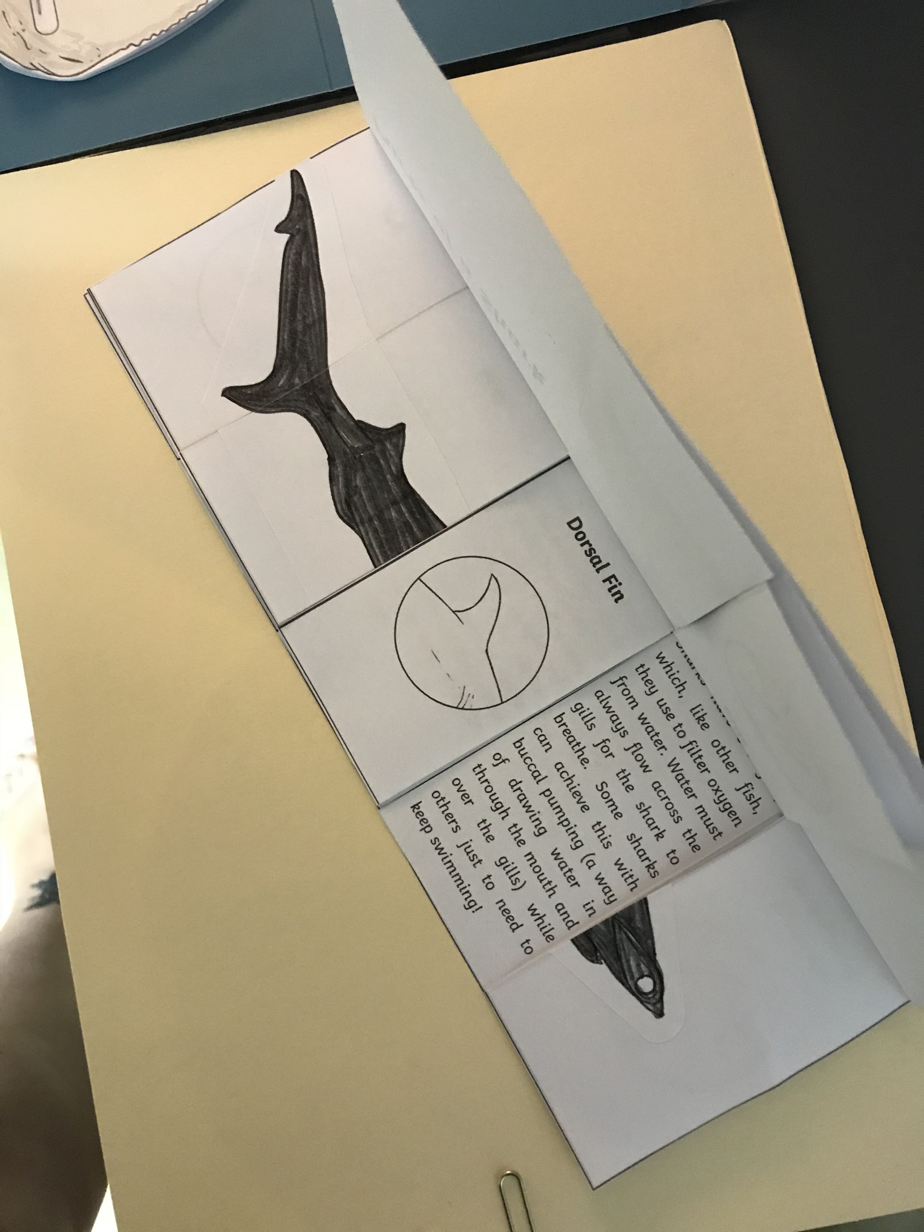 Twinkl Shark Lapbook Resource