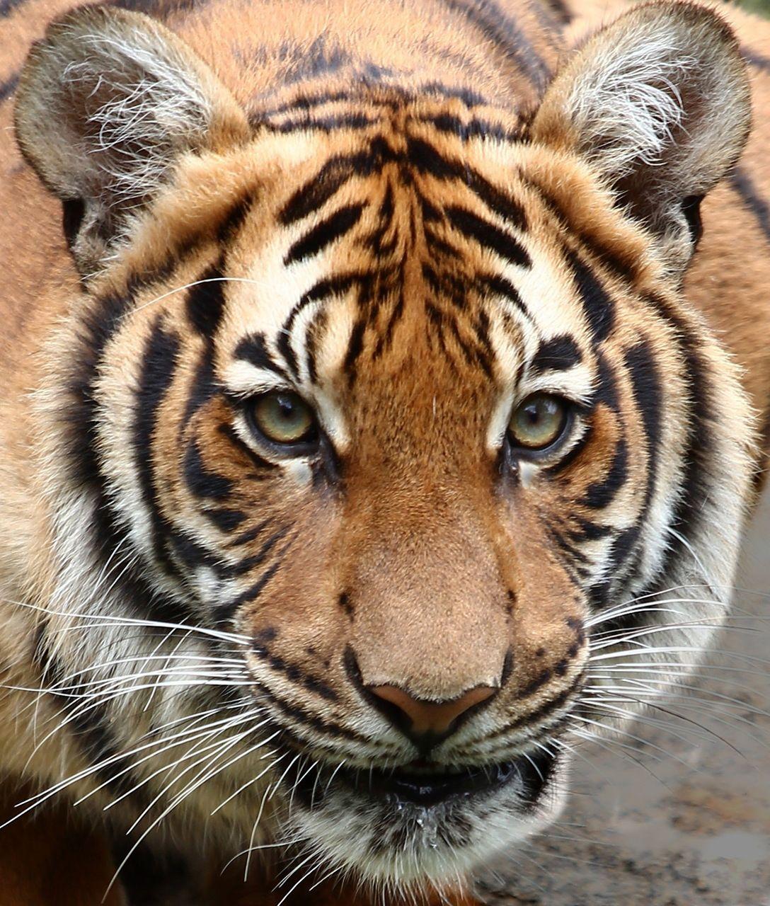 Magical Nature Tour Nature tour, Wild cats, Tiger