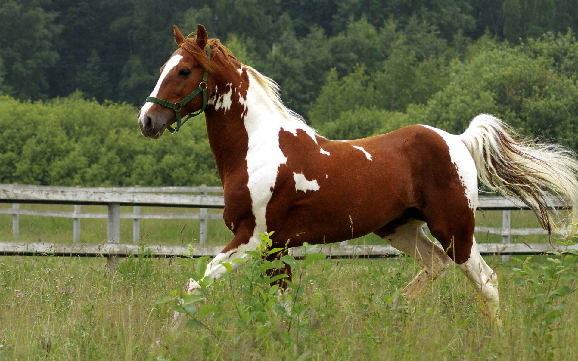 Download Horses 6713 1600x1200 Px High Resolution Wallpaper Horse Wallpaper Horses Paint Horses For Sale