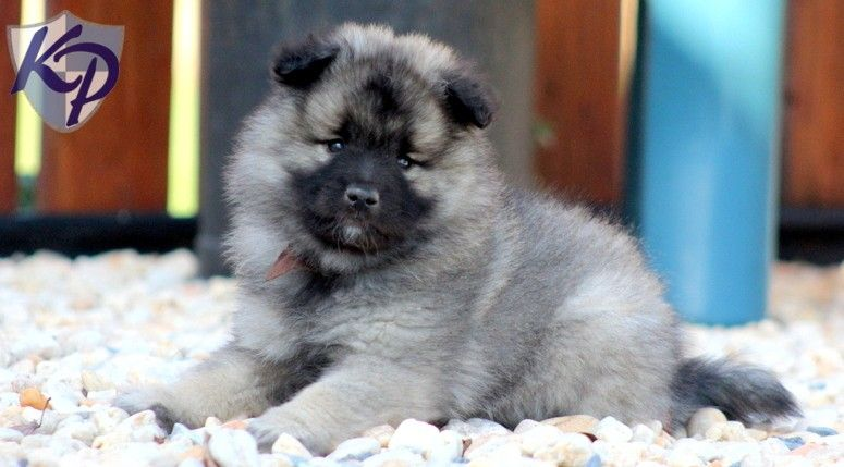 Puppy Finder Find Amp Buy A Dog Today By Using Our Petfinder Puppy Finder Puppies Dogs