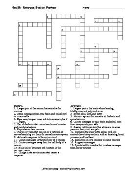 Crossword Puzzle Covering The Basic Structures And Functions Of Nervous System