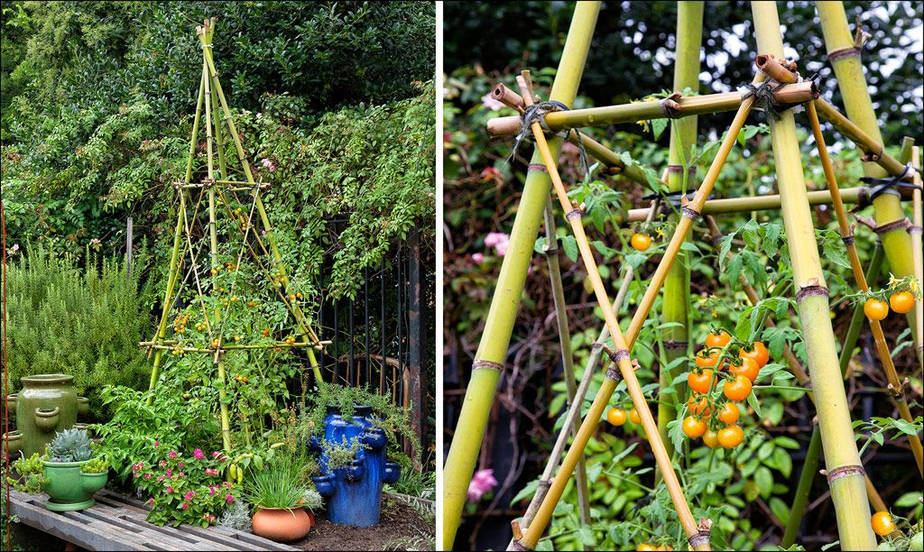 How To Build A Bamboo Trellis Tower Bamboo Trellis Bamboo