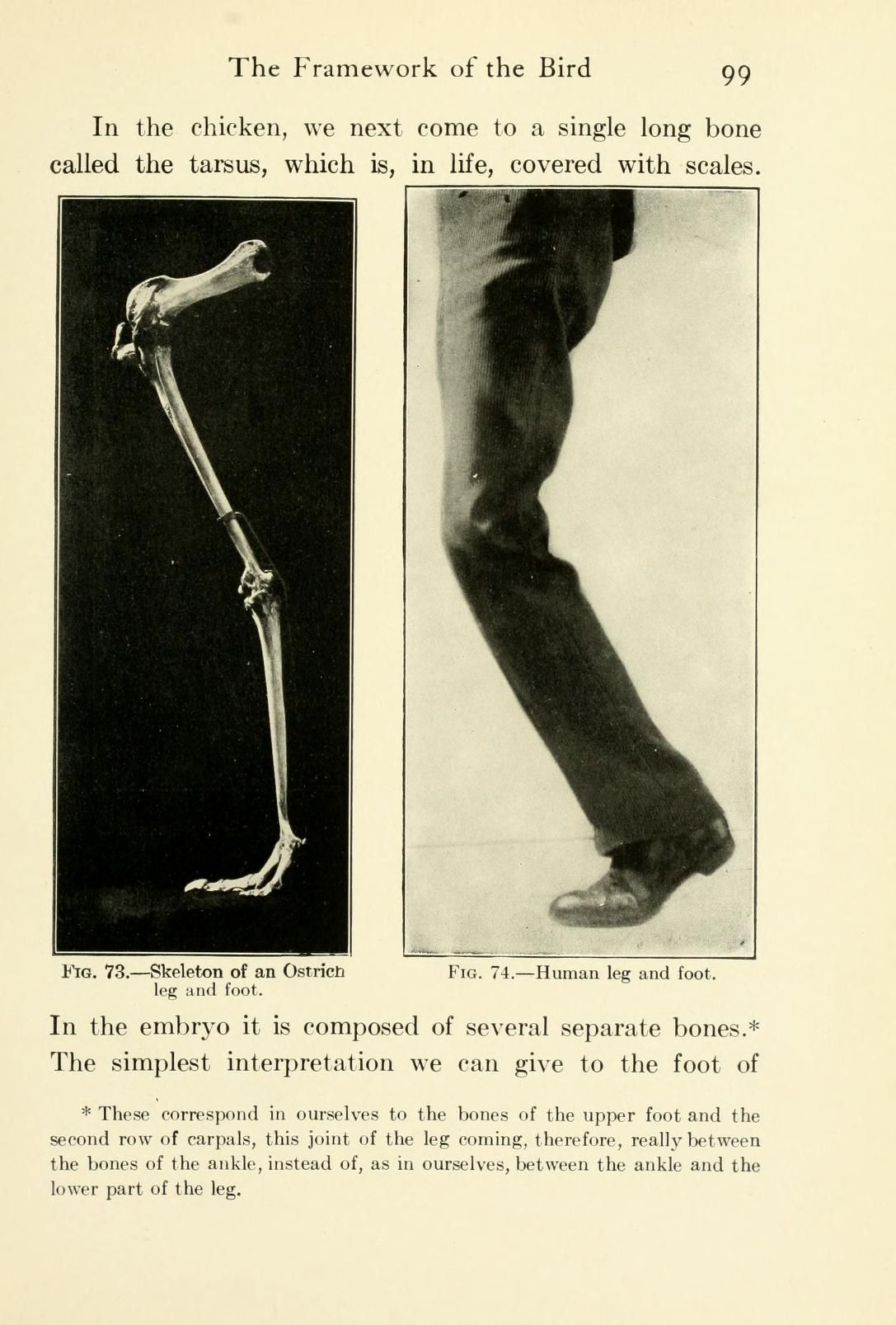 The bird; its form and function | comparative Anatomy | Pinterest ...