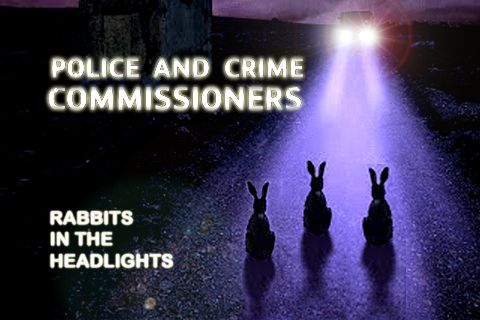 rabbits in the headlights - Google Search