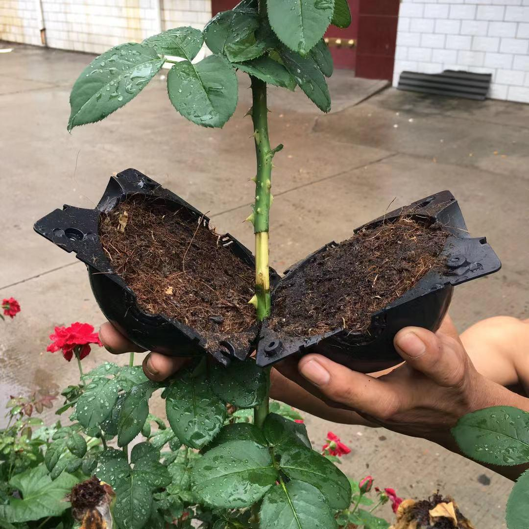 Plant Root Growing Box Salrass In 2020 Plant Roots Plants Grow Boxes