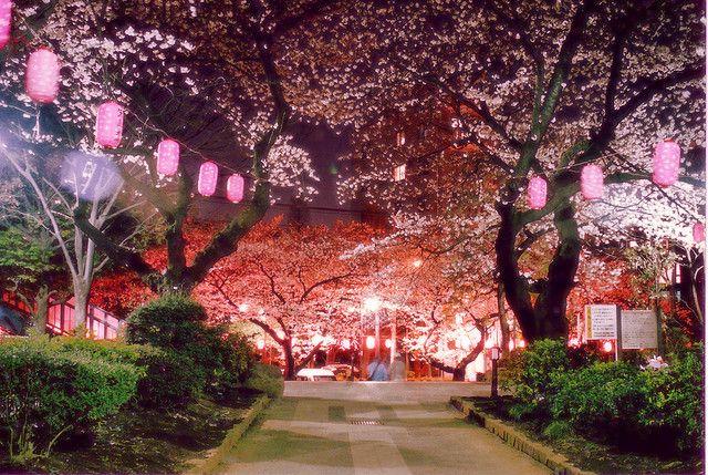 Bobo Cakes S Favorites Japan Tokyo Japan Cherry Blossom Japan