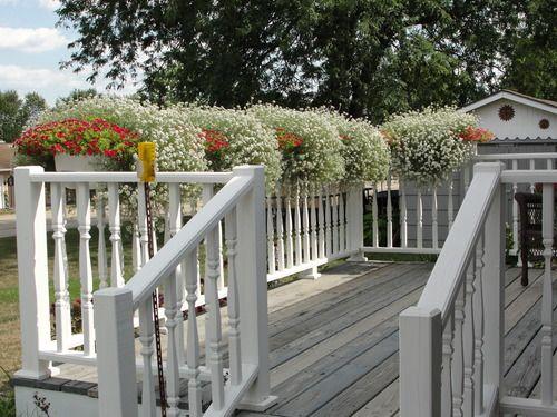 Apollo Plastics L2x4 White 2 By 4 Mount Deck Fence Railing Planter 12 Inch By 30 Inch Rectangular White By Apo Railing Planters Balcony Garden Deck Fence