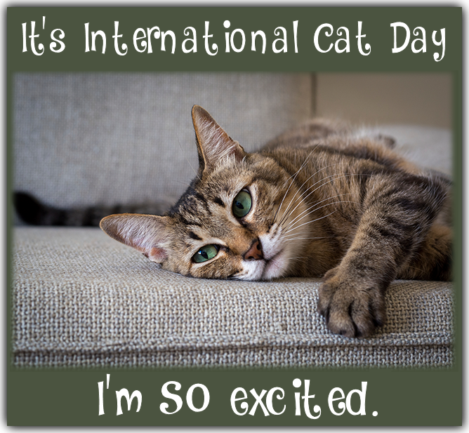August 8 Is Int L Cat Day National Cat Day Cat Day International Cat Day