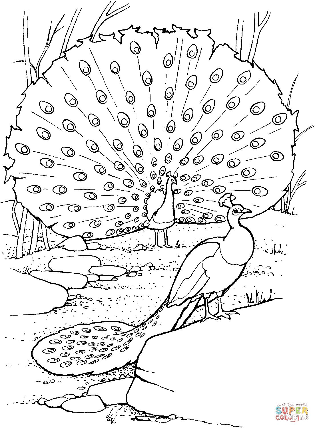 Coloring Page Peacock Printable Colouring Pages Of Peacocks Pdf Free 21 Marvelous Photo Peacoloring Cartoon Fish Gold Give Thanks To The Lord Picture Baby Di 2020